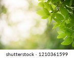 closeup nature view of green... | Shutterstock . vector #1210361599