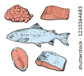 vector sketch sea trout fish... | Shutterstock .eps vector #1210364683
