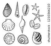 Seashell Vector Illustration