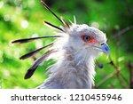 lovely secretary bird | Shutterstock . vector #1210455946