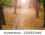 footpath through foggy forest... | Shutterstock . vector #1210521460