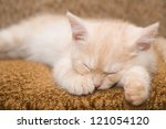 Stock photo the red kitten of breed scottish straight 121054120