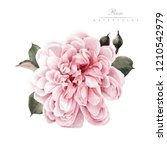 rose  watercolor  can be used... | Shutterstock . vector #1210542979