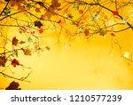 autumn leaves background.... | Shutterstock . vector #1210577239
