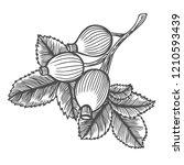 dog rose  sketch vintage... | Shutterstock . vector #1210593439