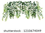 climbing wall of ivy. vector... | Shutterstock .eps vector #1210674049