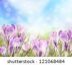 Crocuses Background
