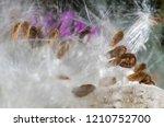 nature abstract  elegant white...   Shutterstock . vector #1210752700