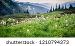 alpine flowers in mountain | Shutterstock . vector #1210794373