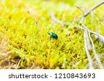 vibrant shiny geotrupidae earth ... | Shutterstock . vector #1210843693