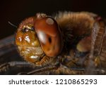 dragonfly close up | Shutterstock . vector #1210865293
