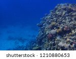 coral reef in egypt with color... | Shutterstock . vector #1210880653