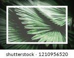 white line frame on green palm...   Shutterstock . vector #1210956520