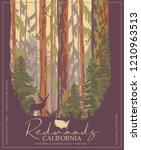 Redwoods Park In California...
