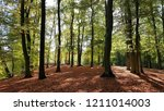 autumnal beech forest in... | Shutterstock . vector #1211014003