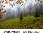 autumn misty forest park... | Shutterstock . vector #1211023360
