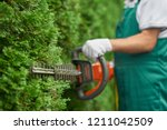 Close up of man hand with hedge trimmer cutting bushes of white cedar to ideal fence. Male gardener, wearing in overalls with protective glove working with professional garden equipment in backyard. - stock photo