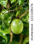 Passion Fruit  Jamaica...
