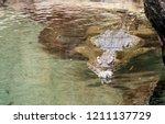 slender snouted crocodile ... | Shutterstock . vector #1211137729