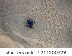 black beetles  darkling beetles ... | Shutterstock . vector #1211200429