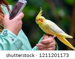 budgerigar is a long tailed... | Shutterstock . vector #1211201173