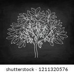cocoa tree. chalk sketch on... | Shutterstock .eps vector #1211320576