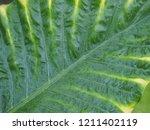 fresh raindrops glisten on the... | Shutterstock . vector #1211402119
