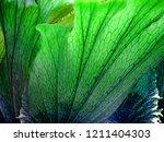 fresh green close up big fern... | Shutterstock . vector #1211404303