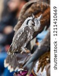 Northern White Faced Owl On Th...