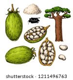 baobab vector superfood drawing.... | Shutterstock .eps vector #1211496763
