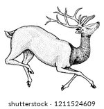 soaring deer. wild animal... | Shutterstock .eps vector #1211524609