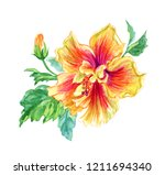 yellow pink hibiscus  tropical... | Shutterstock . vector #1211694340