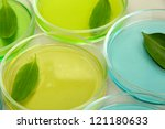 genetically modified leaves... | Shutterstock . vector #121180633
