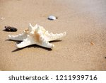 starfish on the beach. | Shutterstock . vector #1211939716
