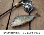 freshwater perch and fishing... | Shutterstock . vector #1211954419