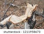 felled tree in the forest  man... | Shutterstock . vector #1211958673