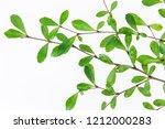 beautiful ivory coast almond... | Shutterstock . vector #1212000283