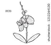 decorative orchid flowers ... | Shutterstock . vector #1212264130