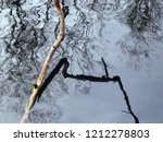 Crooked Branch Reflected On A...