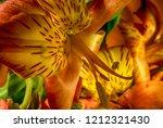 Flowers macro photography and background capture with Nikon D850 & Nikon 60mm Macro lens & R1C1 macro flash