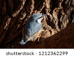 eurasian nuthatch perched on... | Shutterstock . vector #1212362299