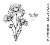daisy flower drawing. hand... | Shutterstock . vector #1212524236