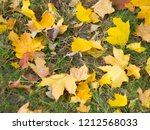 colorful beautiful autumn... | Shutterstock . vector #1212568033
