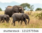 Stock photo elephants in the ngorongoro crater of tanzania 1212575566