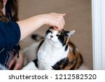 young woman bonding with calico ... | Shutterstock . vector #1212582520