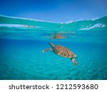 swimming with turtles on the... | Shutterstock . vector #1212593680