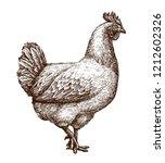 chicken  hen sketch. poultry...   Shutterstock .eps vector #1212602326