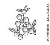 mistletoe illustration  drawing ... | Shutterstock . vector #1212703156