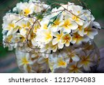 frangipani flowers in a round...   Shutterstock . vector #1212704083