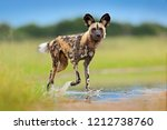 wildlife from zambia  mana... | Shutterstock . vector #1212738760